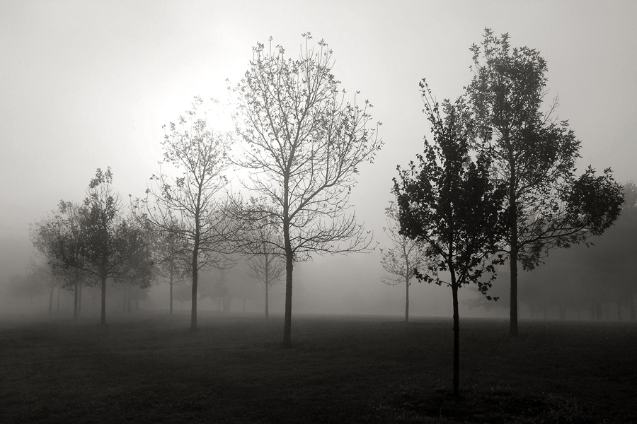 Fog Through The Trees fine art black and white photograph by Dan Cleary of Cleary Creative Photography in Dayton Ohio