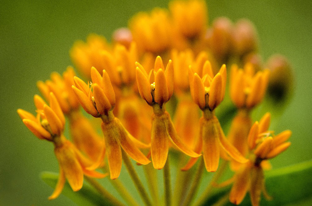 Extreme Close Up of Orange Flowers by Dan Cleary of Cleary Creative Photography in Dayton Ohio