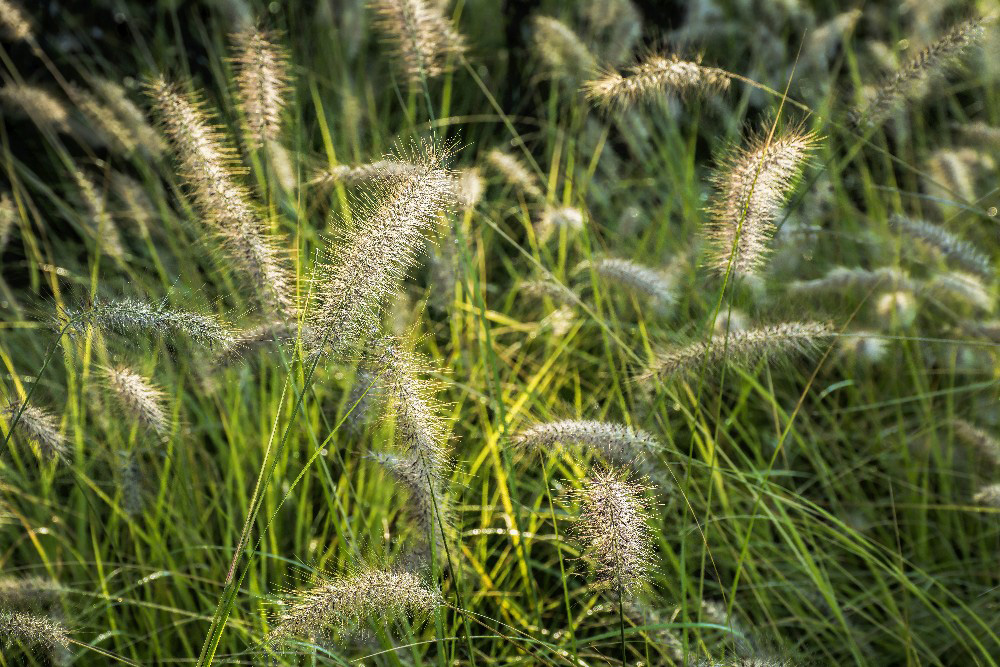Fall Grasses in Englewood Ohio by Dan Cleary of Cleary Creative Photography in Dayton Ohio