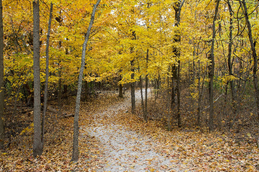 Fall woods trail by Dan Cleary of Cleary Creative Photography in Dayton Ohio