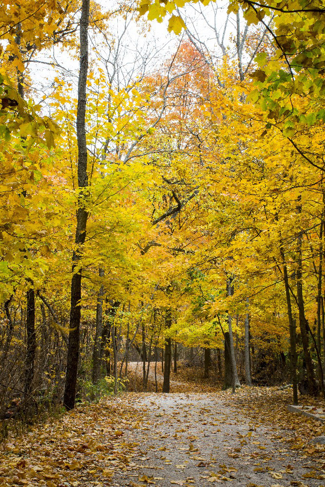 Fall woods with yellow leaves by Dan Cleary of Cleary Creative Photography in Dayton Ohio