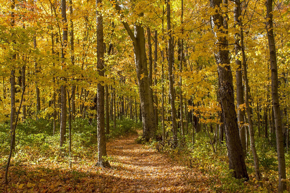 colorful fall woods and trail Miami County Ohio by Dan Cleary of Cleary Creative Photography in Dayton Ohio