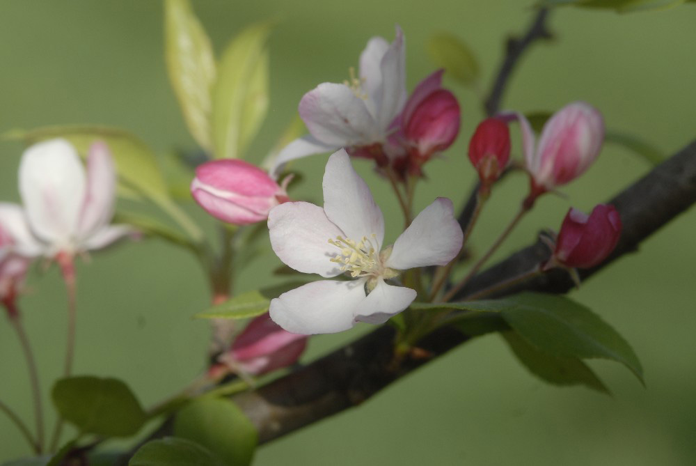 Spring Blossoms fine art photograph by Dan Cleary of Cleary Creative Photography in Dayton Ohio