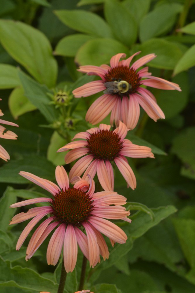 Summer flowers fine art photograph by Dan Cleary of Cleary Creative Photography in Dayton Ohio