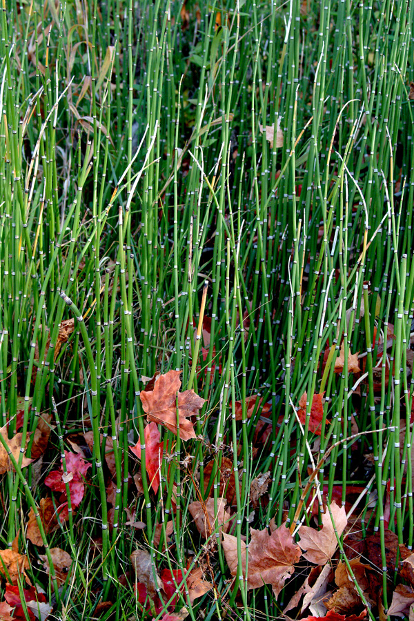 Fall Grasses  By Dan Cleary of Cleary Creative Photography in Dayton Ohio
