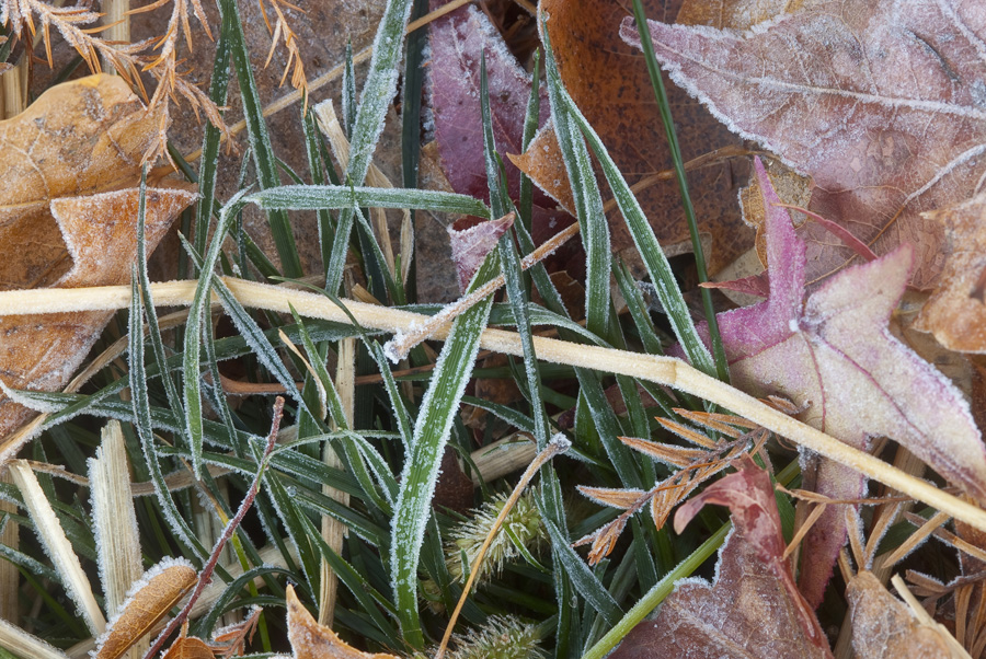 Leaves And Grasses With frost By Dan Cleary of Cleary Creative Photography in Dayton Ohio