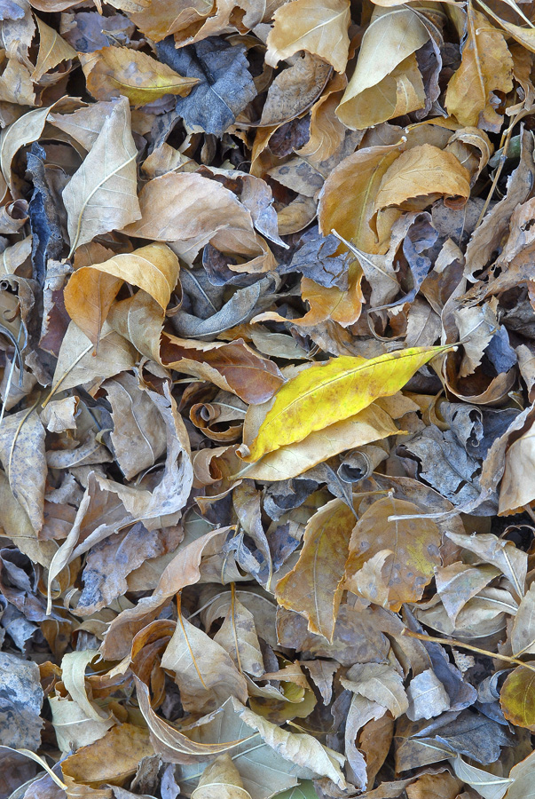 The Yellow Leaf By Dan Cleary of Cleary Creative Photography in Dayton Ohio