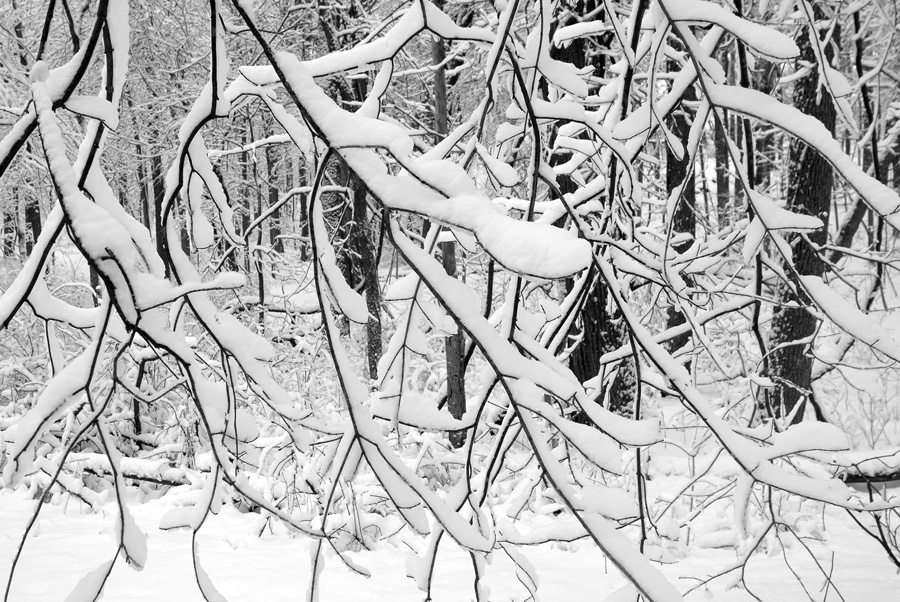 Winter snow on tree branches at Hills and Dales Metro Park by Dan Cleary of Cleary Creative Photography in Dayton Ohio